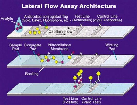 test salivare di tipo lateral flow