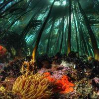 Elicitori algali: riducono proliferazioni microbiche e tumorali