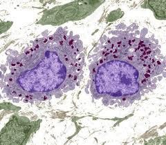 Immagine di macrofagi al TEM