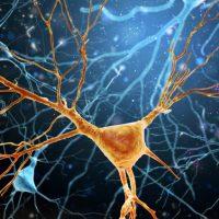 Correlazione tra sclerosi laterale amiotrofica e microbiota intestinale