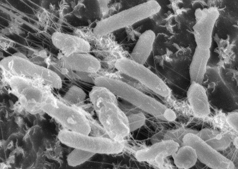 ideonella sakaiensis batteri mangia plastica