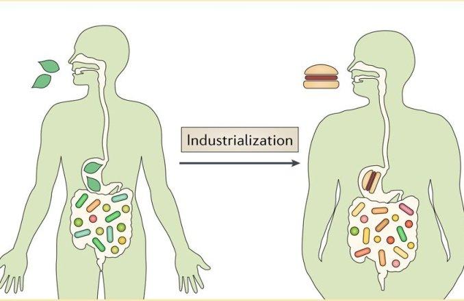 Differenze nel microbiota pre e post-industrializzazione