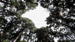 Inori_Film_still_1