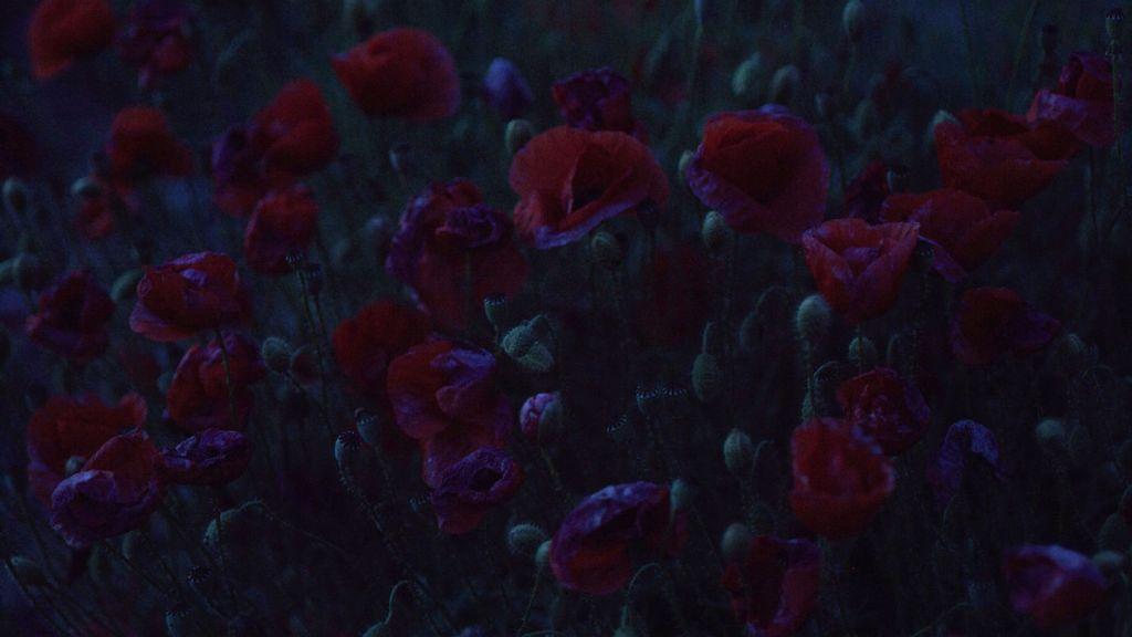 La imagen tiene un atributo ALT vacío; su nombre de archivo es landscape-2-1024x576.jpeg