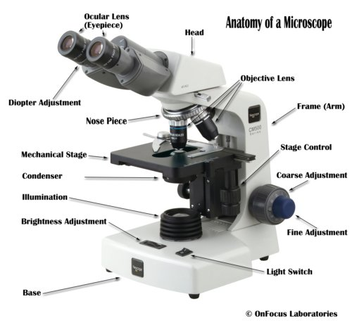 simple microscope diagram caravan towing wiring parts of a compound with and functions here are the important anatomy