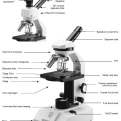 Simple Microscope Diagram Wheel Horse Parts Maintenance Tips