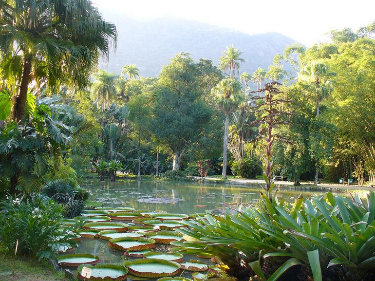 Botanical Garden of Rio  MicroTravelling