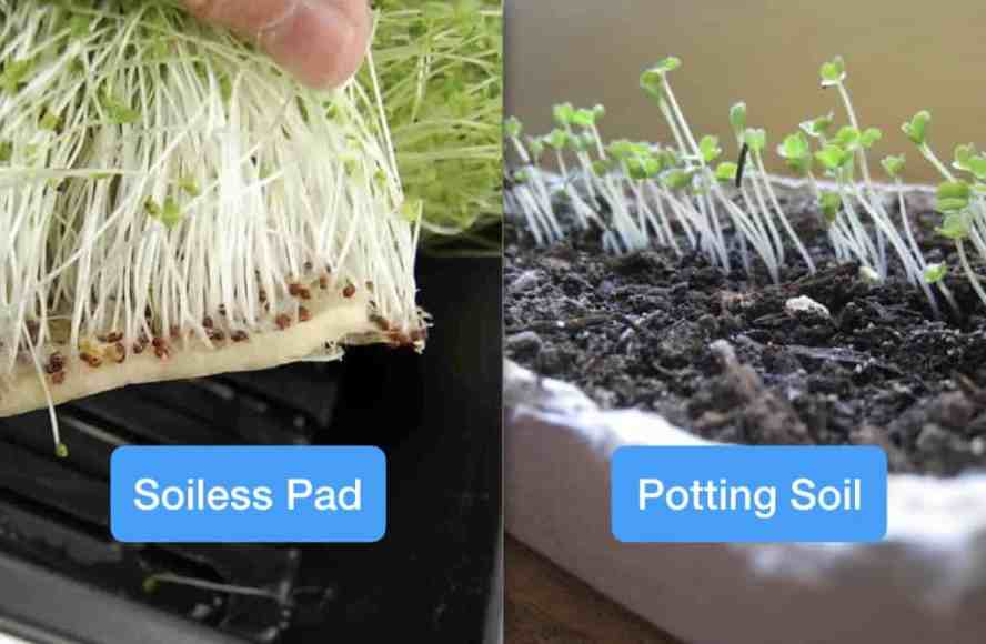 which soil system to use for microgreens