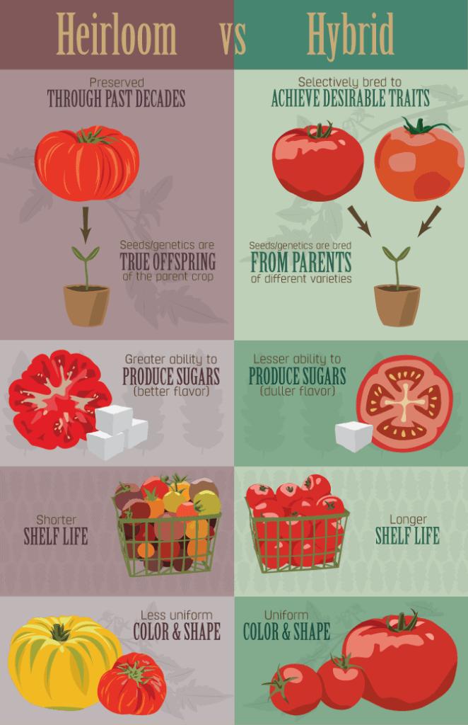 heirloom vs hybrid seeds