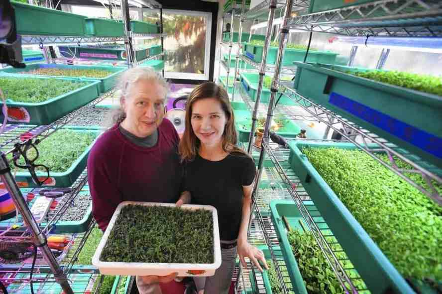 Learning the art of selling microgreens