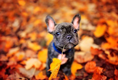 It's Fall Y'all!