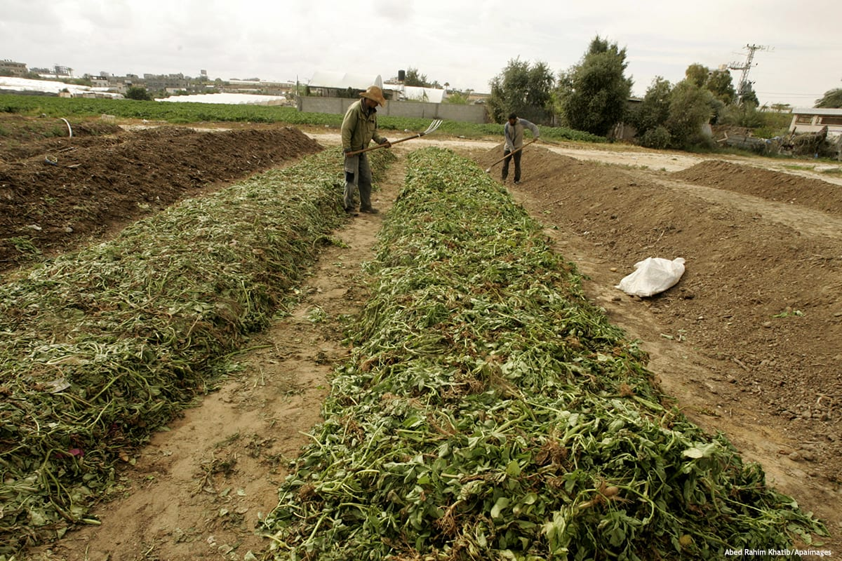 Palestinian farmers work in turning household garbage and the remains of plants into compost for farming in stead of chemical fertilisers and pesticides [Abed Rahim Khatib/Apaimages]