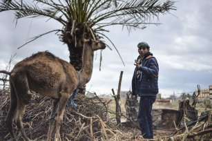 GAZA CITY, GAZA - FEBRUARY 12: A shepherd Bedouin boy with a camel is seen near the wreckages and their makeshift huts -without water and basic living necessities, at Gaza Valley in Gaza City, Gaza on February 12, 2017. After become homeless, many Bedouins try to continue their lives under hard conditions. ( Mustafa Hassona - Anadolu Agency )