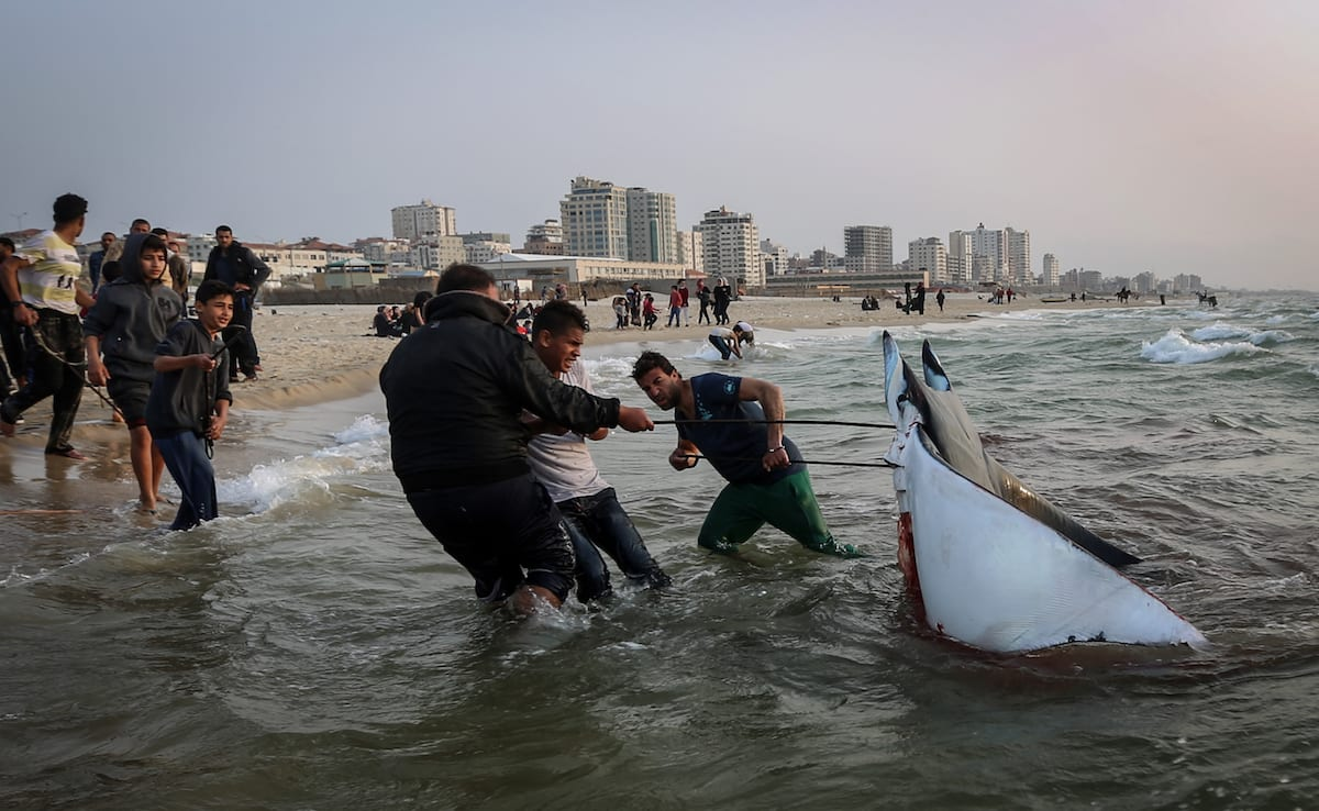 Palestinian fishermen pull rough rays out of the sea after they return from fishing as two weeks long fishing ban ends in Gaza City on 6 April, 2017 [Ali Jadallah/Anadolu Agency]