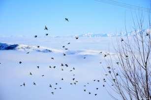 MUS, TURKEY- A frozen flight