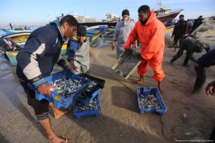 Gaza fishermen carry the sardines they caught [Mohammed Asad/Middle East Monitor]