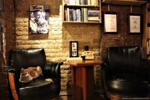 A cat is seen at a cafe belonging to Turkish man, Suat Kilic, who allows stray animals to enter his cafe [Mustafa Ünal Uysal/Anadolu Agency]