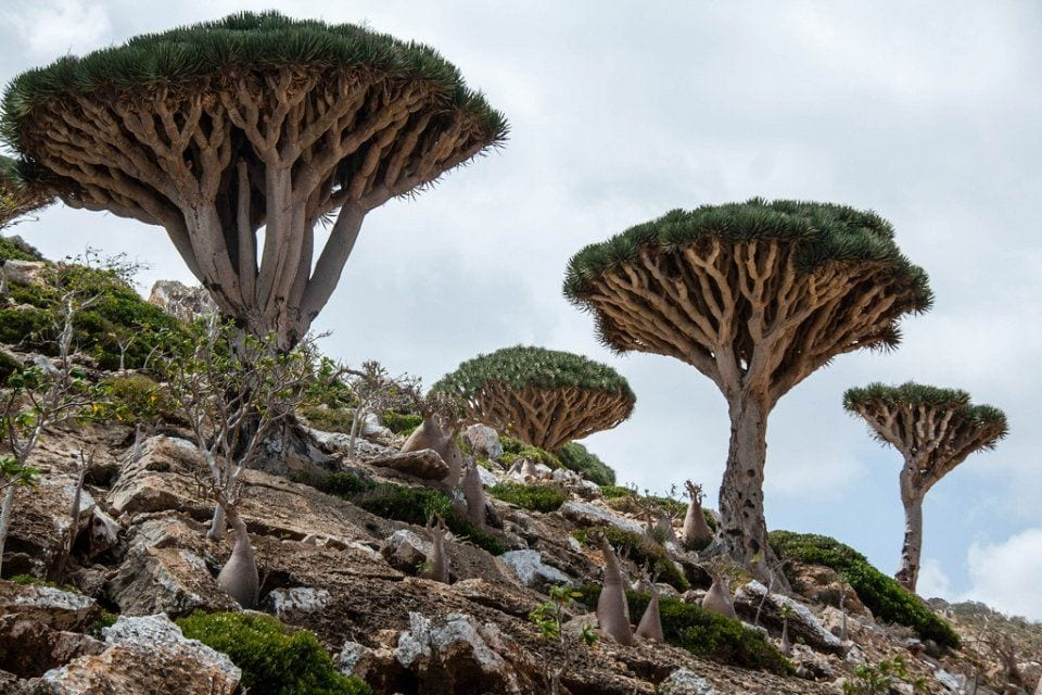 Socotra Islands in the Arabian Sea [Wikipedia]