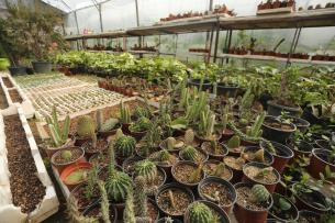 Cactus nursery in the Gaza Strip [Mohammed Asad/Middle East Monitor]