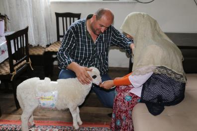 A beekeper couple Abdulkadir and Seyhan Yirmibesoglu care for a lamb named 'Lokum' after they brought it to their home from a tableland 6 months ago in Ordu, Turkey on 4 July, 2018 [Hayati Akçay/Anadolu Agency]