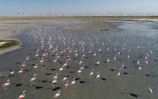 Flamingos are seen on the Lake Tuz after their incubation period in Aksaray, Turkey on 12 July, 2018 [Murat Öner Taş/Anadolu Agency]