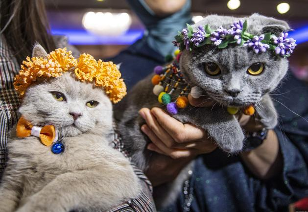 These two cheerful cats are all dressed up and ready to be judged. Turkey, 14 October 2018 [Aytaç Ünal/Anadolu Agency]