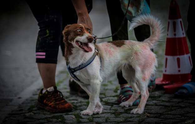 """A dog is covered in colourful powder at the """"Color Sky 5k"""" running fest. 30 September, 2018 [Sergen Sezgin/Anadolu Agency]"""