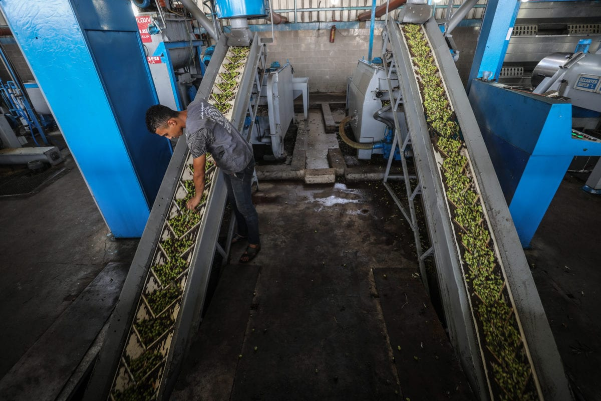 Gazan worker is seen at a factory as he produces olive oil from the olives picked. [Ali Jadallah / Anadolu Agency]