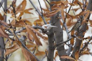 Lack of pigmentation gives this special bird white feathers. Ankara, 9 November 2018 [Mustafa Kamacı/Anadolu Agency]