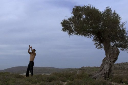 Maher dances near an ancient olive tree, symbolising his connection to the land