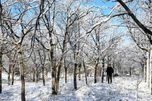 A man walks between snow-covered trees after a snowfall in Ankara, Turkey on December 13, 2018 [Aytuğ Can Sencar/Anadolu Agency]