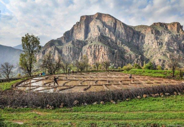 Rice farmers work at a paddy field during spring season in Cukurca district of Hakkari, Turkey on 8 May, 2019 [Ali İhsan Öztürk/Anadolu Agency]