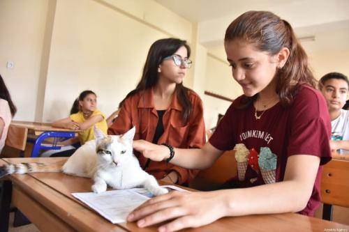 "Two cats, Mia and Gofret, are awarded symbolic certificates as part of the school's ""A friend's pet for every class"" programme, seen on June 14, 2019 in Adiyaman, Turkey [Orhan Pehlül / Anadolu Agency]"