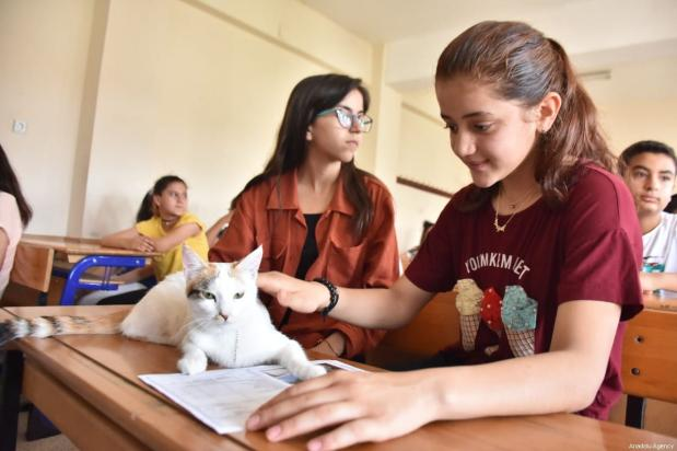"""Two cats, Mia and Gofret, are awarded symbolic certificates as part of the school's """"A friend's pet for every class"""" programme, seen on June 14, 2019 in Adiyaman, Turkey [Orhan Pehlül / Anadolu Agency]"""