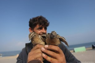 A Palestinian man can be seen with birds he helped free from a netted fence in Gaza on 18 September 2019 [Mohammed Asad/Middle East Monitor]