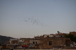 Flock of birds fly at dawn over the rooftops of the ancient city of Fes, Morocco, in September 2019