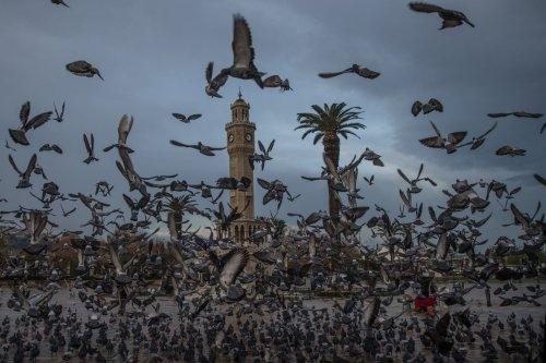 Feed the birds (lira a bag)