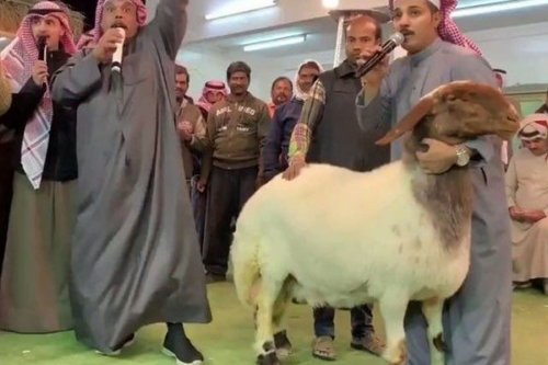 sheep in Kuwait has been sold at auction for a record 40,000 dinars ($131,600).