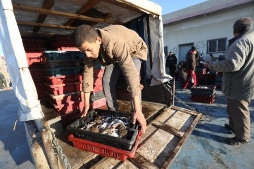 Rare fish breeds appear in Gaza after recent drop in temperature [Mohammed Asad/Middle East Monitor]