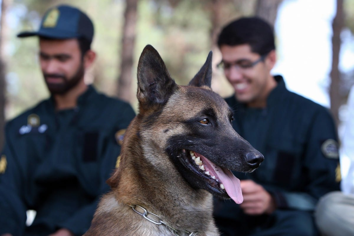 Iranian policemen and a sniffer dog Tehran, Iran on 26 June 2012 [ATTA KENARE/AFP/Getty Images]