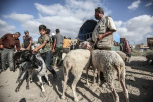 Gazans at a livestock market in preparation for Eid Al-Adha, 17 July 2020 [Mohammed Asad/Middle East Monitor]