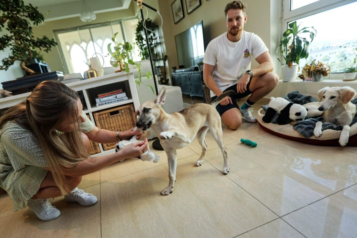 Paige Tiesdell and Edward Riley, British residents of Qatar, play with their rescue dogs at their home in the Qatari capital Doha on 18 June 2020, who were formerly strays on the Doha streets before being taken in by the Paws animal welfare organisation. [KARIM JAAFAR/AFP via Getty Images]
