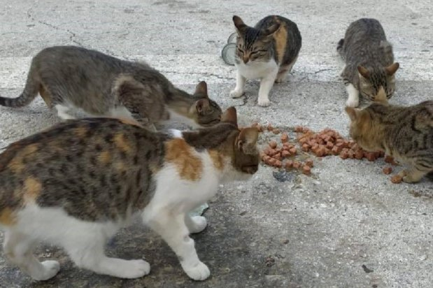 Stray cats at the Palestinian Animal League shelter, a charity that deals with animal welfare in Palestine, 17 July 2020 [Palestinian Animal League]