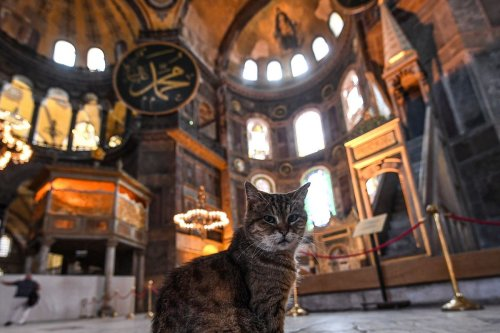 A cat keeps cool sitting inside the Hagia Sophia museum in Istanbul, on July 10, 2020. [OZAN KOSE/AFP via Getty Images]