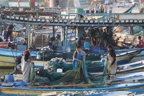 Gaza fishermen obtained large quantities of fish after being prevented from sailing for 18 days due to the occupation's closure of the sea, 3 September 2020 [Mohammed Asad/Middle East Monitor]