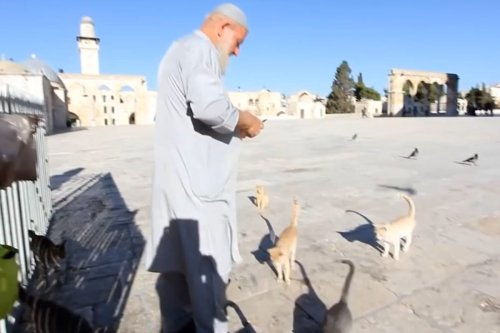 Thumbnail - Al-Aqsa Mosque's 'father of kittens' dies of COVID-19 complications