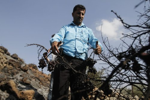 A Palestinian farmer from the West Bank village of Nahalin near Bethlehem, inspects his land after it was set afire by Jewish settlers from Beitar Illit settlement, on 11 October 2011. [MUSA AL SHAER/AFP via Getty Images]