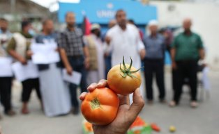 Gaza farmers protest Israel restrictions on exports, Gaza, on 4 October 2021, [Mohammed Asad]
