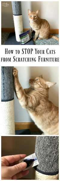 How to STOP Cats from Scratching Furniture!  MidgetMomma