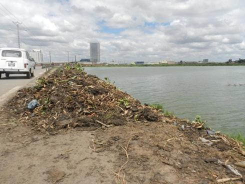 Marais Masay : Une odeur nauséabonde à cause des jacinthes d'eau fanées